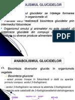 Anabolism Glucide