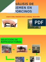 Análisis de Semen en Porcinos