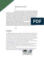 FENÓMENOS MOLECULARES para precentar fluidos .docx