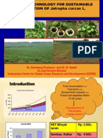Current Technology for Sustainable Production of Jathropha curcas L.