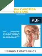 Arteria Carotida Externa y Venas