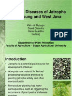 Pest and Diseases of Jathropha in Lampung and West Java