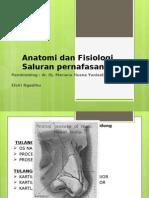 Anatomi Dan Fisiologi Saluran Pernapasan Atas