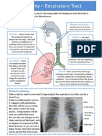 Module 4  - Respiratory Tract