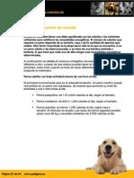 Cantidad Correcta de Comida Perros