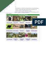 Flora y fauna (1)