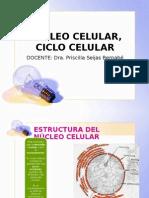 Nucleo Ciclo Celular