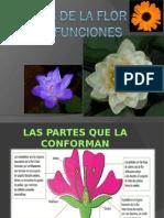 Partes de La Flor y Sus Funciones