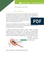celulas_procarionte_aucarionte