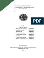 Lap.praktikum Fitofarmasi Curcumin 2B
