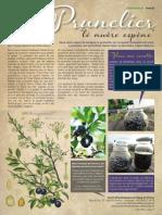 prunelier