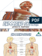 NGRTCI Endocrine System Anatomy