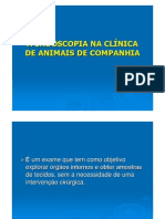A Endoscopia Na Clinica de Animais de Companhia