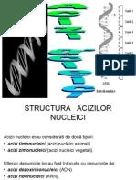 Curs 1+2 - Acizi nucleici