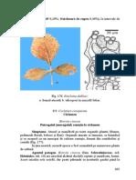 ciclamen.pdf