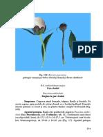 gura_leului.pdf