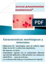 Neumococo Gonococo Meningococo BacillusAntrax