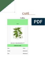 CAFÉ  BOTÁNICA  Y  DESCRIPCIONES DE LA  ESPECIE