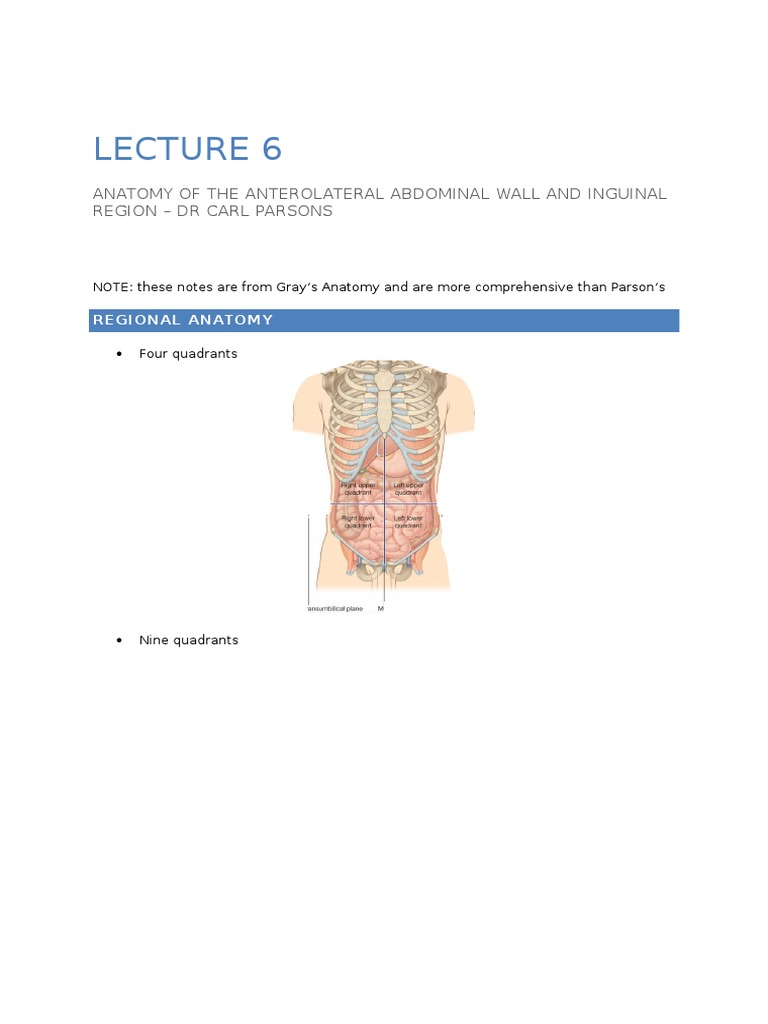 Lecture 6 - Anatomy of the Anterolateral Abdominal Wall and Inguinal ...