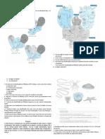 Ficha de Trabalho - Reinos (Aula Prática nr. 1).pdf