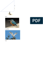 Birds Image.docx