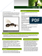 Forest Pest Profile - Leptocybe invasa - Aug 2012 Updated.pdf