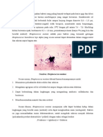 Bakteri Karies Gigi