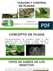 IDENTIFICACIÓN Y CONTROL DE PLAGAS.pptx