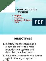 malereproductivesystem-121116191244-phpapp01.ppt