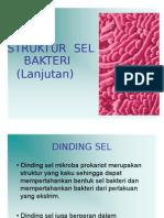 Struktur Sel Bakteri 2