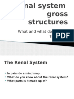 renal system gross structure