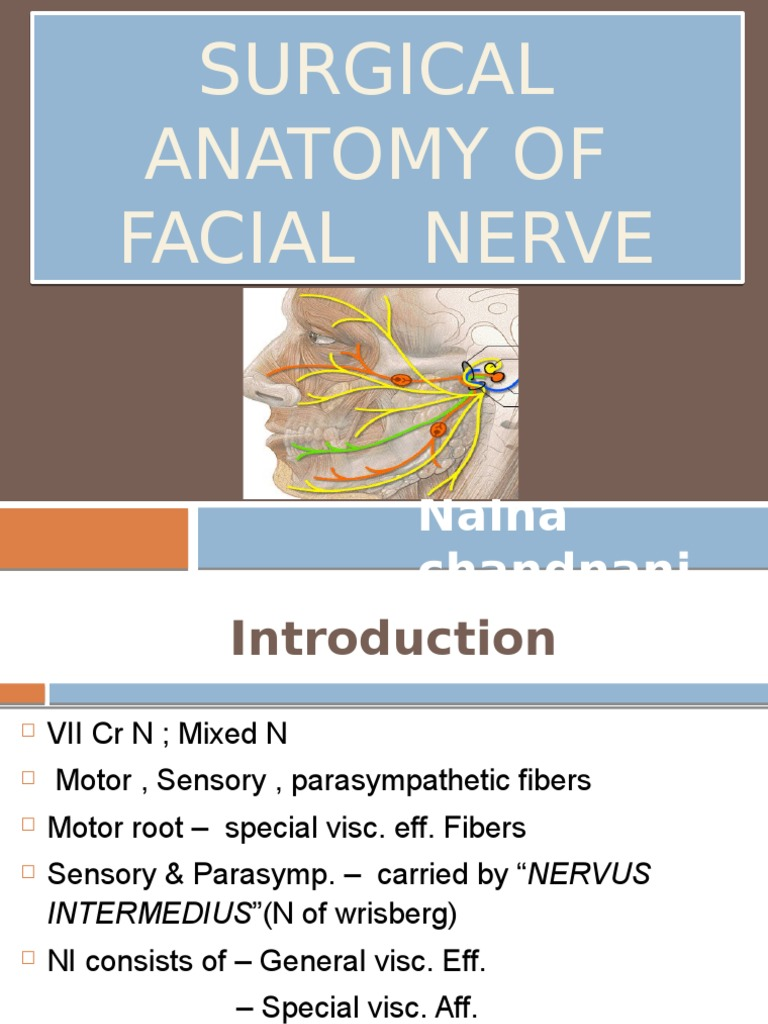 Surgical Anatomy Of Facial Nerve Animal Anatomy Human Anatomy