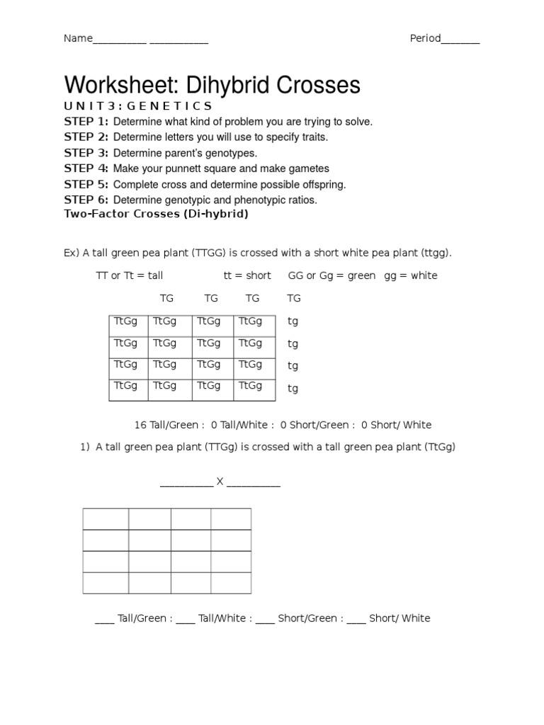Worksheet Dihybrid Crosses Unit 3 Genetics