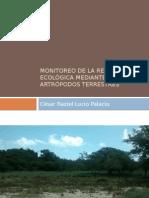 Monitoreo de la restauración ecológica mediante artrópodos terrestres.pptx