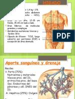 AP. Digestivo 3