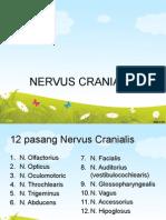 Nervus Cranialis Meta