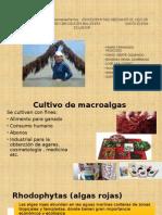 Expo de Macroalgas Gracilaria