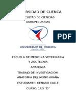 Osteología Mono Araña (Ateles Fuscicepcs)