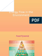 Flow of Energy in the Environment
