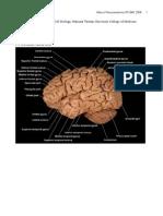 Atlas of Neuroanatomy NTUMC 2008