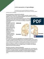 Neurofisiologia de La Memoria y El Aprendizaje Mackay