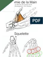 Anatomie Main