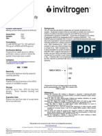 PI480031_NMDA NR2A, N-terminus, Rabbit Polyclonal Antibody Rev 0.0