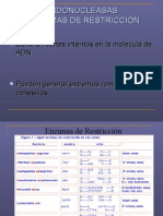 Enzimas de Restriccion-pcr