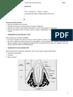2.14.Anatom a Del Periodonto (1)