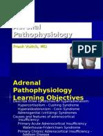 DSA 6 Adrenal13