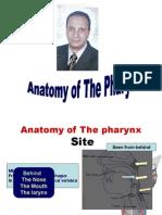 Anatomy Pharynx