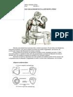Adaptarile Organismului La Efortul Fizic