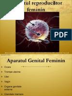 LP II-10-Aparat Genital Feminin I