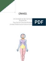 Craneo y Cara Dr. Palacios